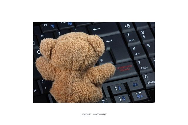 Bärige Soft Skills  © Liz Collet, Bär, tasatur, PC, Notebook, Kompetenz