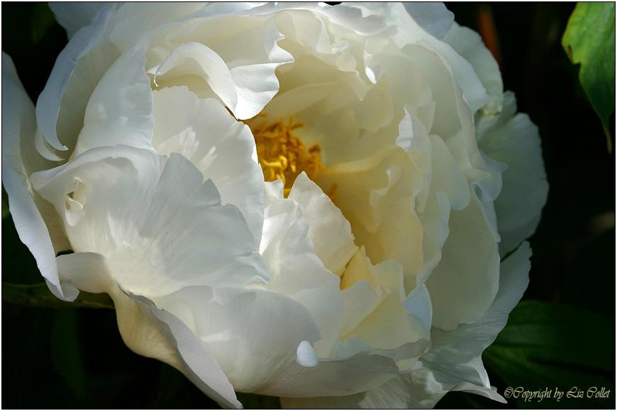 Botanischer Garten: Festakt am 10.5.2014 | Jus@Publicum