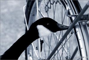Special Task Force Fahrrad © Liz Collet, Wildgans, Fahrrad, Luft, Reifen, Ventil, Fahrradventil, Fahrradsicherheit, Verkehr, Verkehrssicherheit, Verkehrskontrolle, Fahrrad