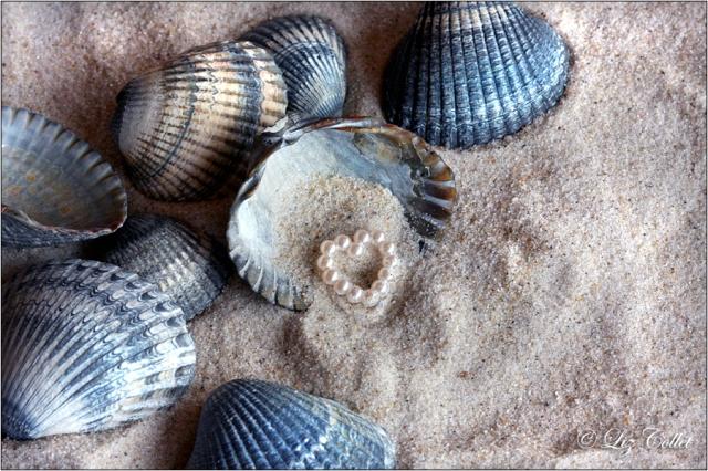 Herzmuscheln, Wattenmeer, Perle, Herz © Liz Collet